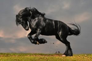 stallion_smaller